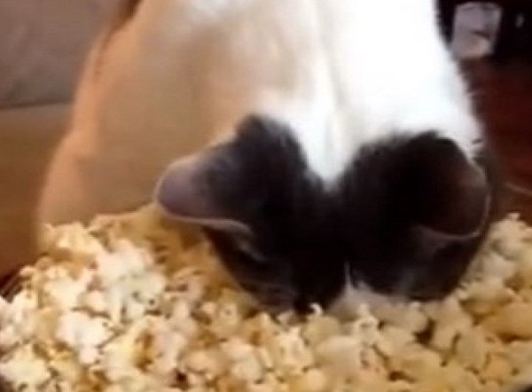 catpopcorn