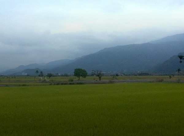 rice-fields-yuli