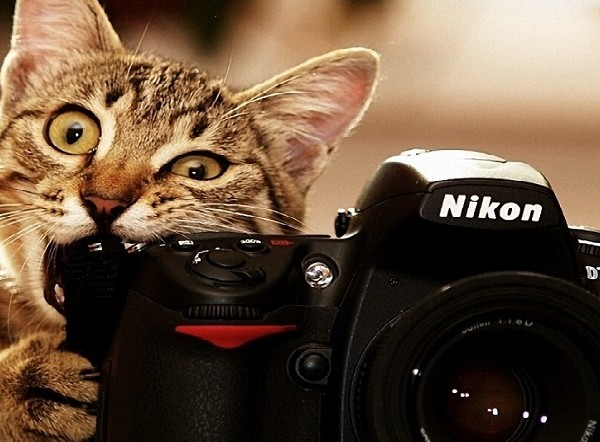 photography-cat