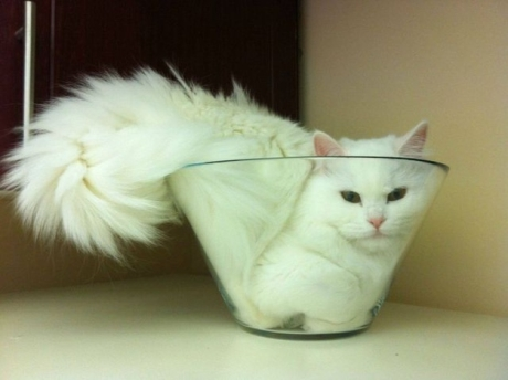 cat-in-a-bowl