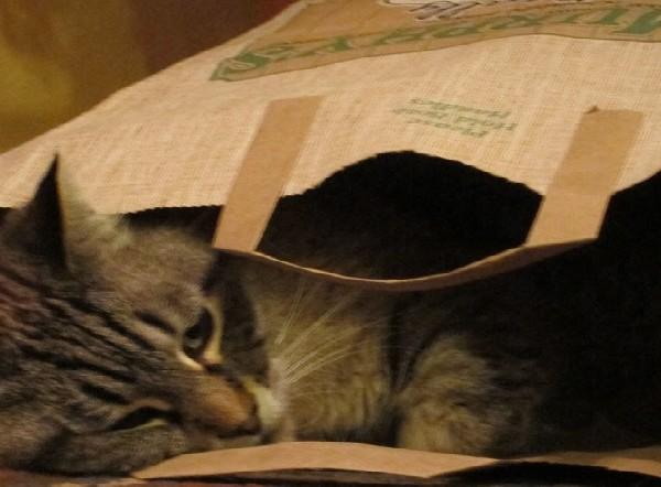 shopping-bag-cat