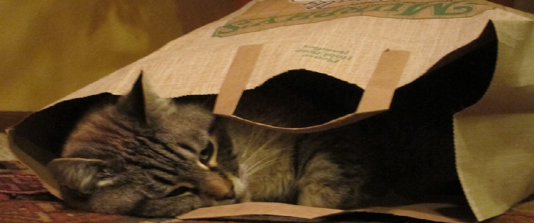 shopping-bag-cat